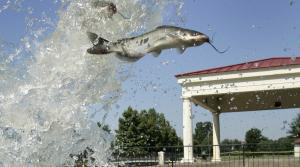 Read full article: Natural Resources Board Signs Off On Catfish Seasons, Bag Limits